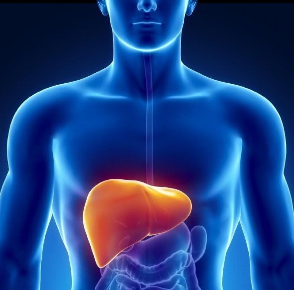 bổ dưỡng cho gan