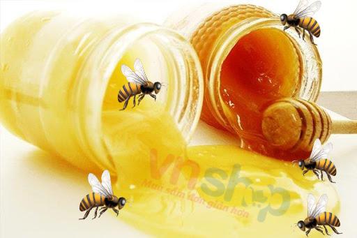 Sữa ong chúa có phải là mật ong không?