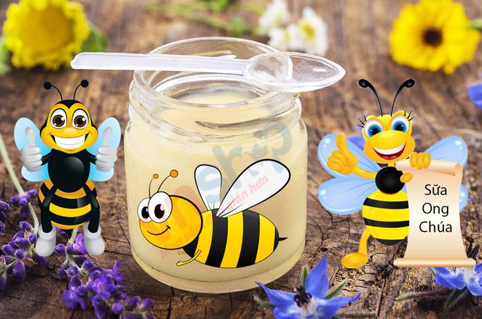 Sữa ong chúa là gì? Sữa ong chúa có tác dụng gì?