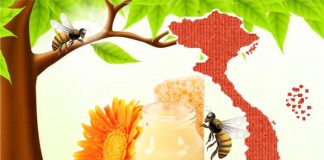 Review 8 loại sữa ong chúa Việt Nam có tốt không?